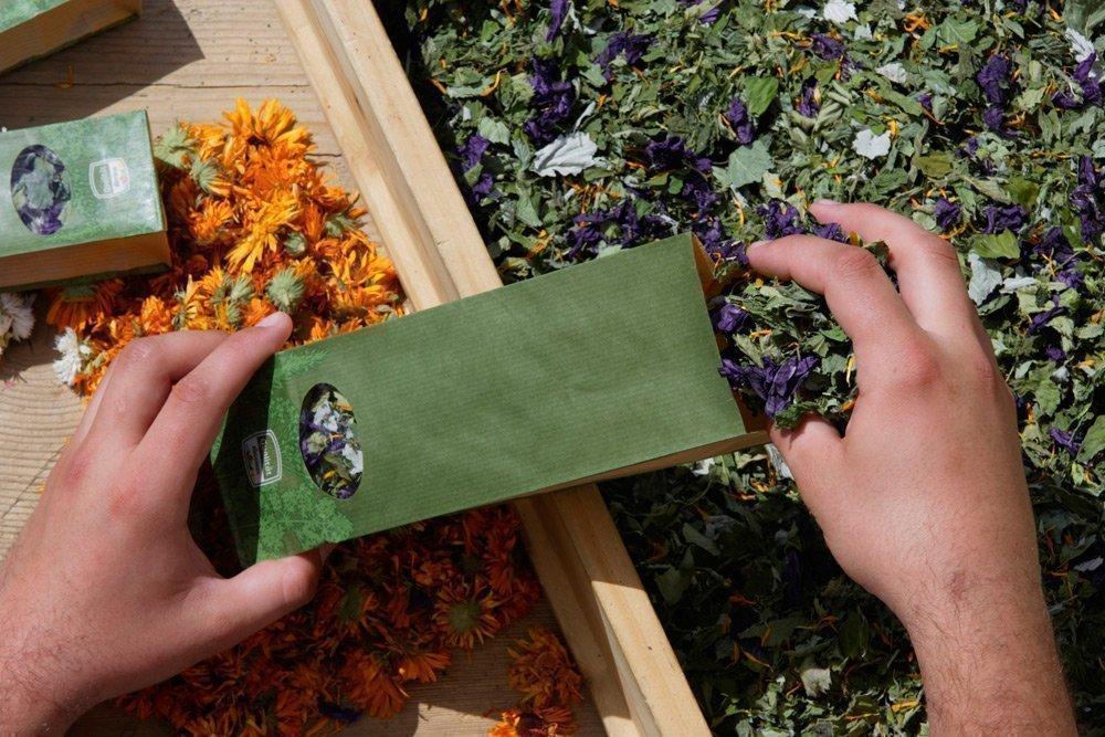 Le erbe medicinali - Il potere curativo delle piante